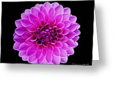 Flowers 71 Greeting Card