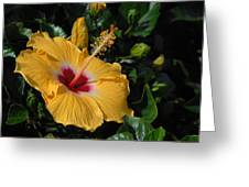 Flowers 727 Greeting Card