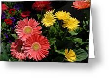Flowers 728 Greeting Card