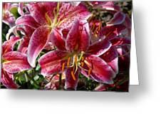 Flowers 731 Greeting Card