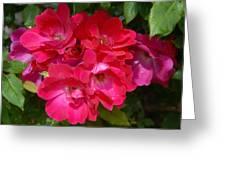 Flowers 732 Greeting Card