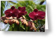 Flowers 823 Greeting Card