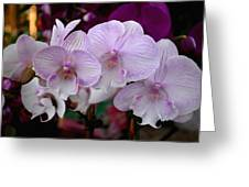 Flowers 824 Greeting Card