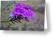 Flowers Against The Wall Greeting Card