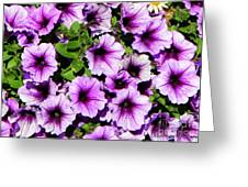 Flowers Alaska July  Greeting Card