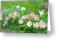 Flowers Along The Edge 1006 Greeting Card