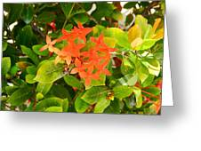 Flowers And Foliage Greeting Card