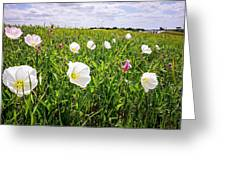 Flowers And Landscapes Along Texas Highway Roadside In Spring Greeting Card
