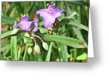 Flowers And Raindrops Greeting Card