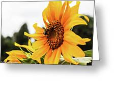 Flowers And The Bees Greeting Card