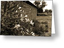 Flowers And Walls Greeting Card