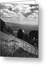 Flowers At Table Rock Overlook In Black And White Two Greeting Card