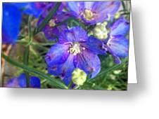 Flowers Blooming Greeting Card
