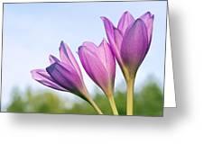 Flowers Crocuses Greeting Card