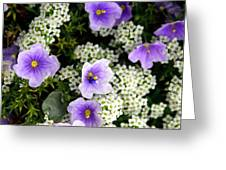 Flowers Etc Greeting Card