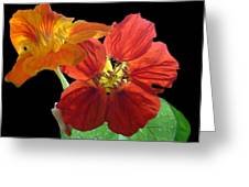 Flowers For Ebie Greeting Card