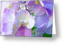 Flowers Hydrangeas Art Prints Floral Garden Baslee Troutman Greeting Card