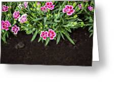 Flowers In Grass Growing From Natural Clean Soil Greeting Card