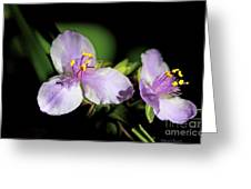 Flowers In Natural Light Greeting Card