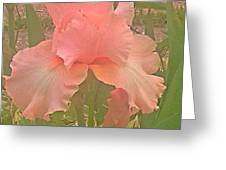 Flowers In Pink Greeting Card
