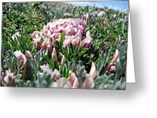Flowers In The Alpine Tundra Greeting Card