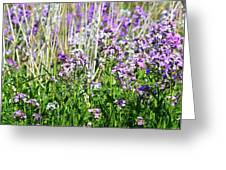 Flowers In The Field  Greeting Card