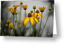 Flowers In The Rain Greeting Card by Robert Meanor