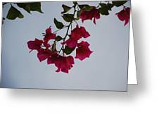 Flowers In The Sky Greeting Card