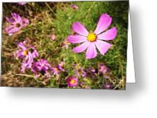 Flowers In Washington Park Greeting Card