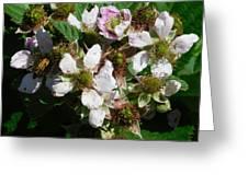 Flowers Of Berries Greeting Card