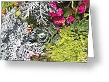 Flowers Of Boca II Greeting Card