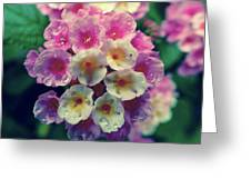 Flowers Of Boquete Panama Greeting Card