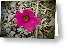 Flowers Of Mount Totumas Greeting Card