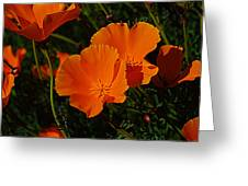 Flowers Of The Andes Greeting Card