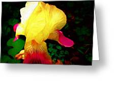 Flowers Of The Universe Greeting Card