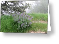 Flowers On A Foggy Day Greeting Card
