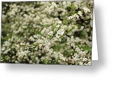 Flowers On A Plum Tree Greeting Card