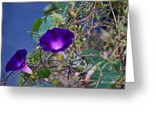 Flowers On Dupont Street Greeting Card