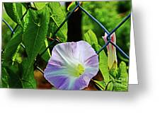Flowers On The Fence 1 Greeting Card