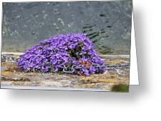 Flowers On The Stone Wall Greeting Card