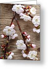 Flowers On Wall Greeting Card