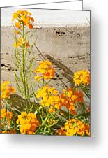 Flowers Orange Greeting Card by Warren Thompson