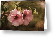 Flowers - Purple Allamanda 2 Greeting Card