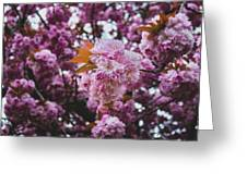 Leeds Pink Flower Greeting Card