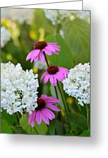 Flowers That Contrast Greeting Card