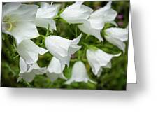 Flowers With Droplets 1 Greeting Card