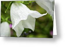 Flowers With Droplets 3 Greeting Card