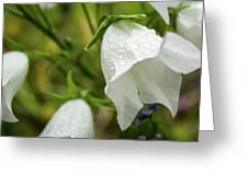 Flowers With Droplets 4 Greeting Card
