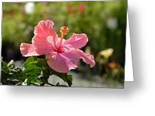 Flowers111 Greeting Card