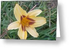 Flowers2 Greeting Card